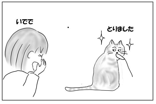 猫のどや顔