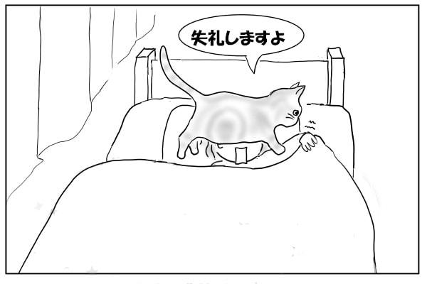 顔をまたぐ猫