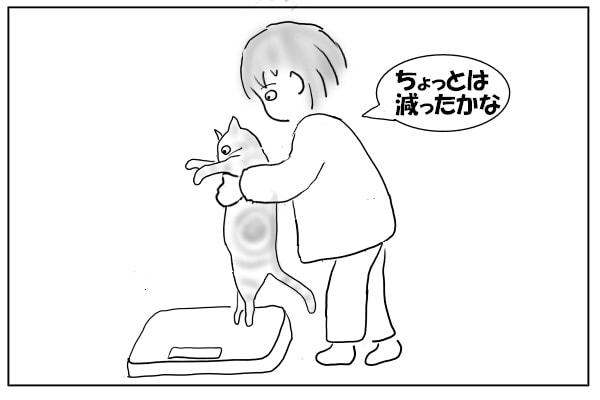 猫を体重計に乗せる