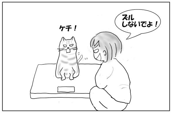 猫とけんか