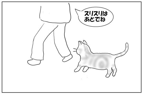 ついてくる猫