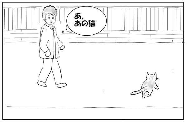 猫が前を横切る