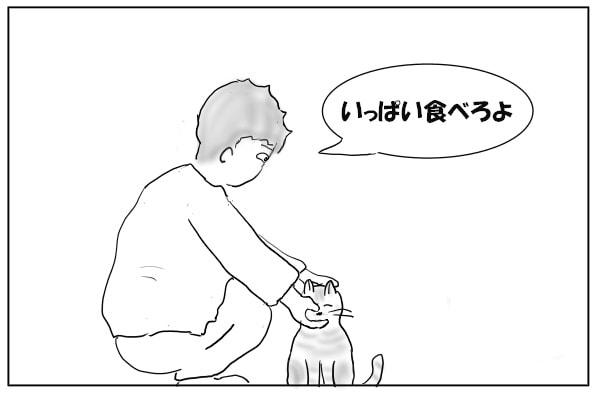 猫にかつおぶしをあげる