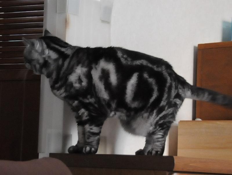 タプタプ猫