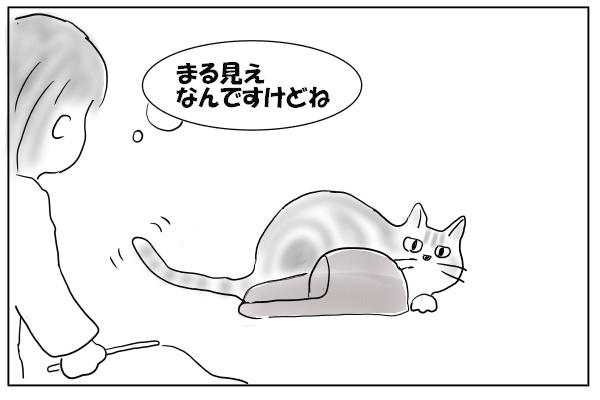 スリッパに隠れる猫