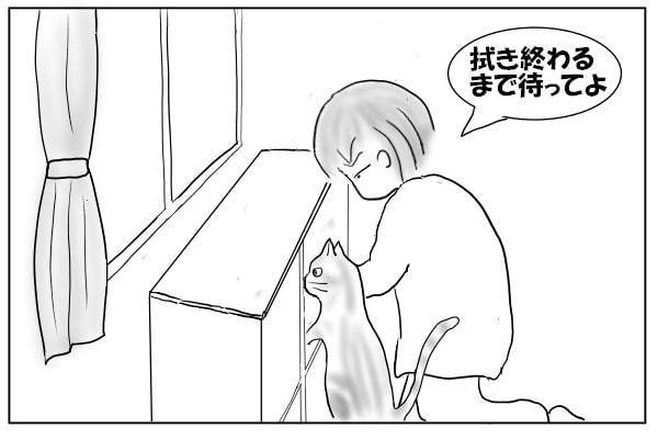 頭を押し込む猫