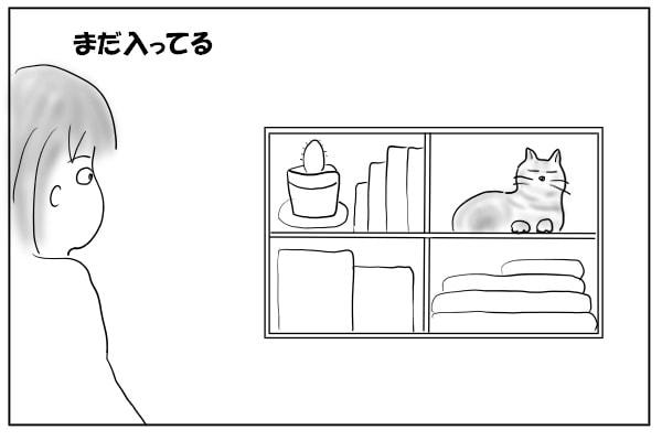 棚の中の猫