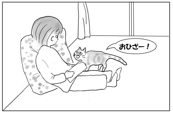 膝に乗りたい猫