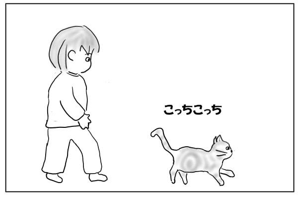 誘導する猫