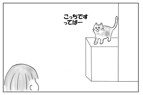 呼びつける猫