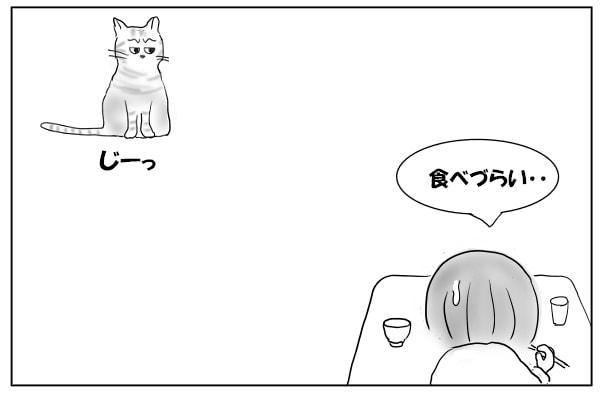 ジッと見る猫