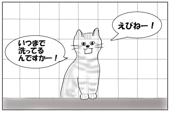 つきまとう猫