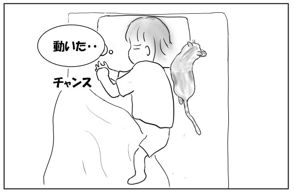 猫が動く気配