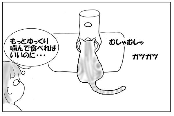 早食いのネコ