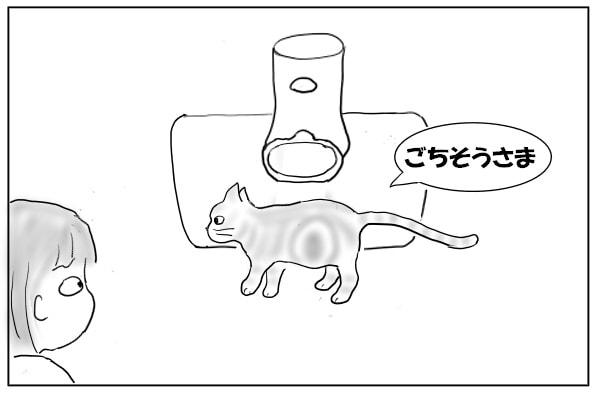 食後のネコ