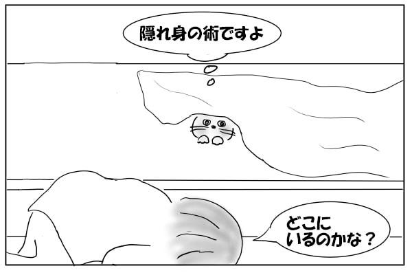 猫とかくれんぼ