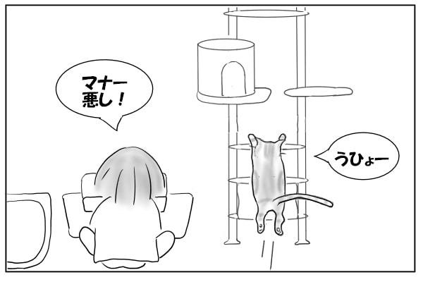 タワーに駆け上がる猫