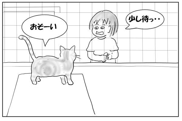 かぶせてくる猫