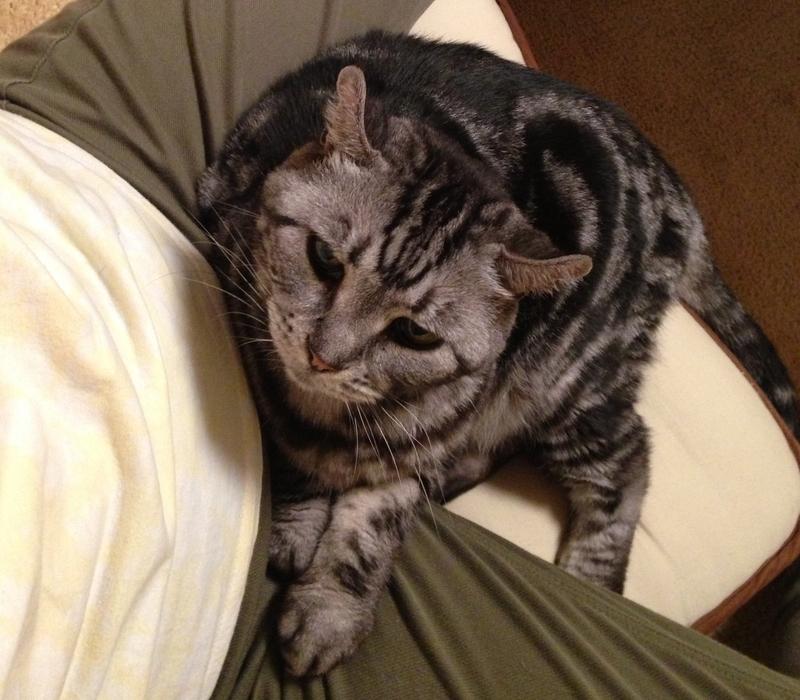 引き留める猫