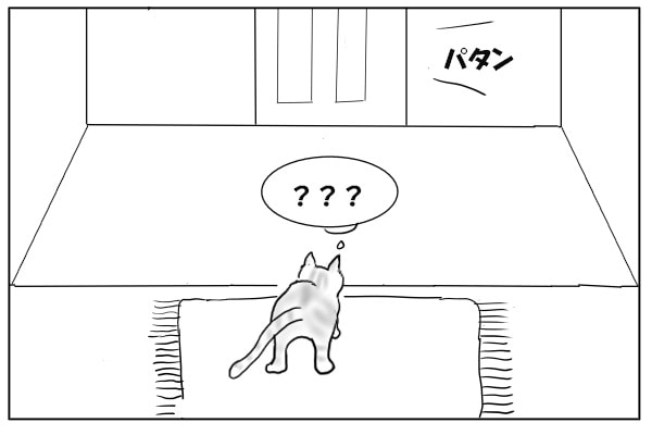 呆然とする猫
