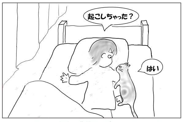 猫も目を覚ます