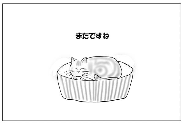 気ままな猫