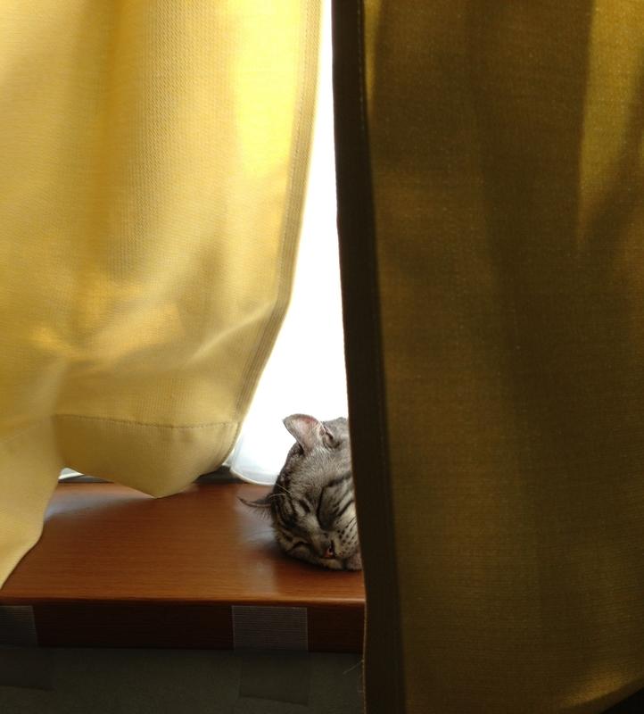 出窓で寝る猫