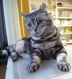 パトロール台の猫