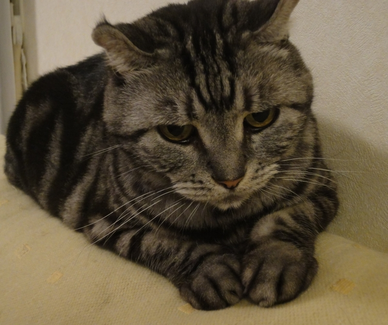 考え込んだ顔の猫