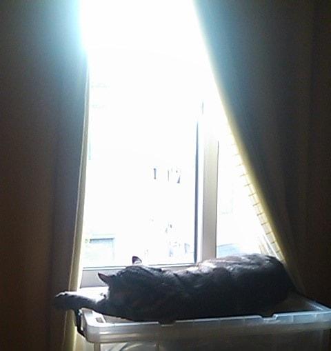 パトロール部屋の猫