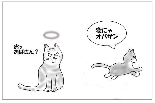 仔猫とオバサン猫