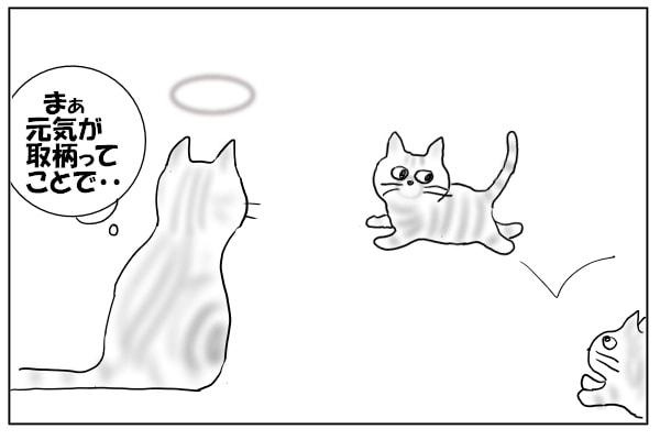 元気に走る仔猫