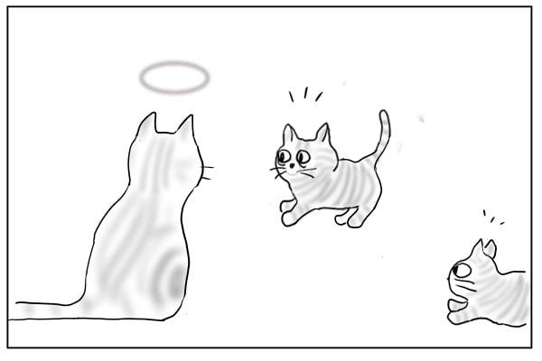 急に立ち止まる猫