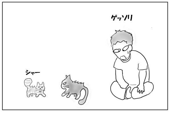 猫と濃密な時間