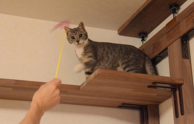 キャットウォークに登った猫