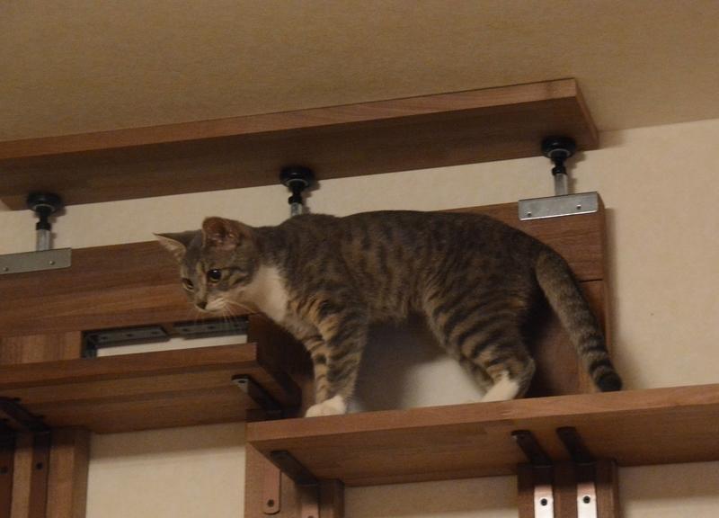探検する猫