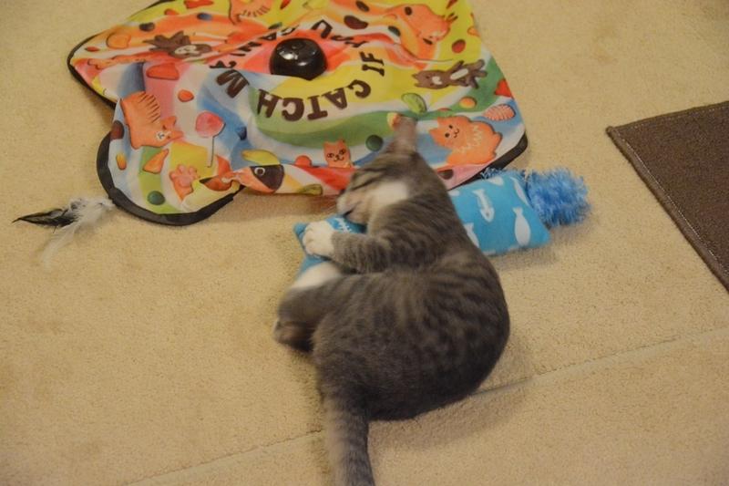 ケリケリする猫