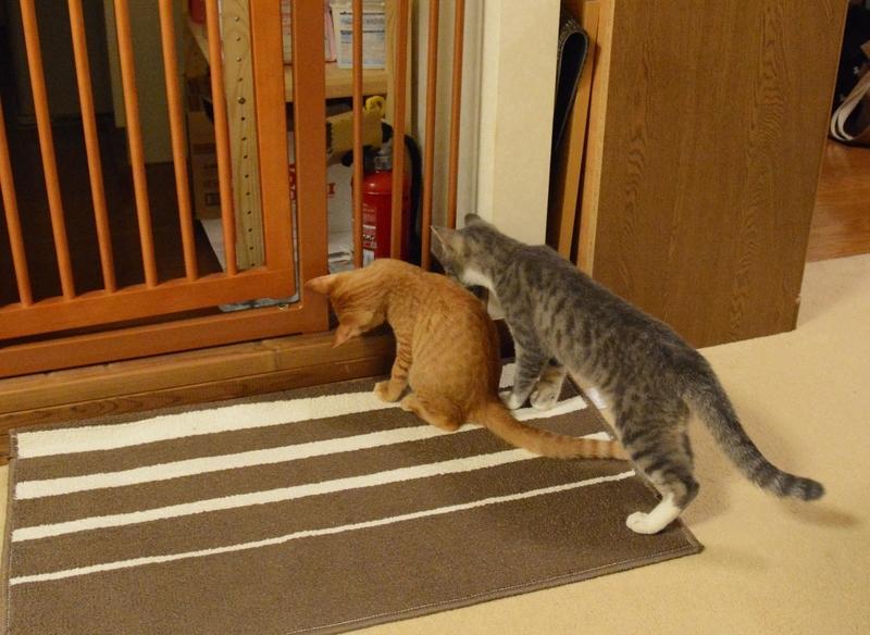 覗きこむ猫