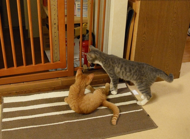ちょっかいを出す猫