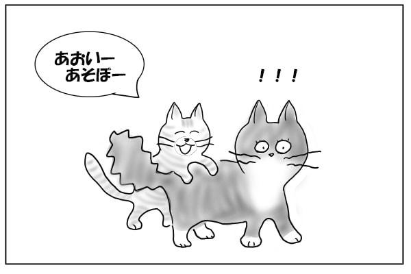 飛びつく猫