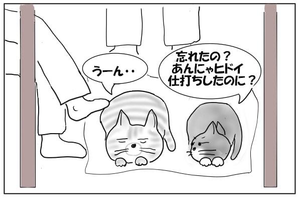 ムッとする猫