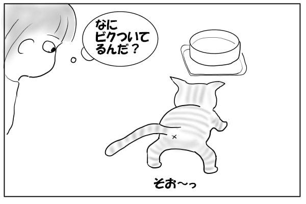 水にビビる猫