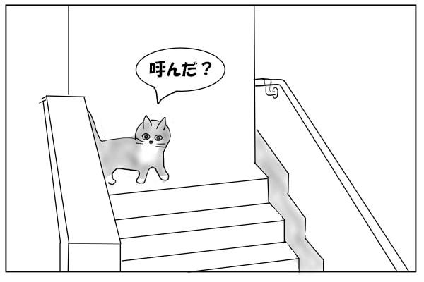 2階からのぞく猫