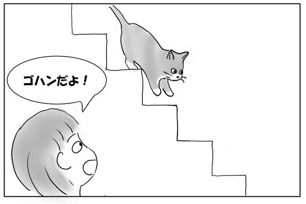 降りてくる猫