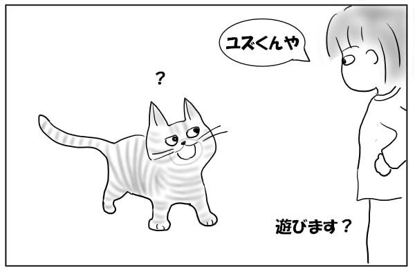 きょとんとする猫