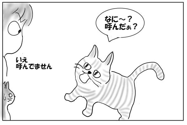 猫のお返事