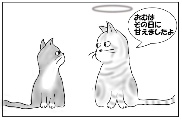 時間のかかる猫