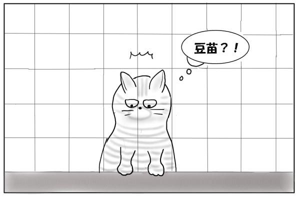 豆苗をじっと見る猫