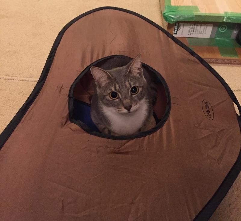 テントから顔を出す猫