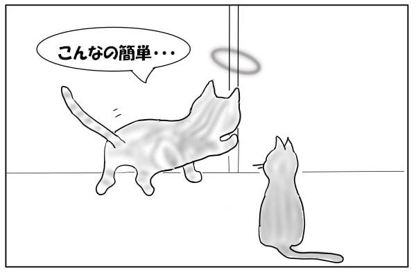 先代猫参戦